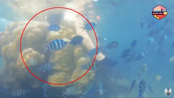 Quang Vinh và Phạm Quỳnh Anh bất ngờ bị lên án vì hành động phá hoại tài nguyên thiên nhiên biển-3