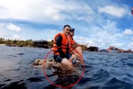 Quang Vinh và Phạm Quỳnh Anh bất ngờ bị lên án vì hành động phá hoại tài nguyên thiên nhiên biển