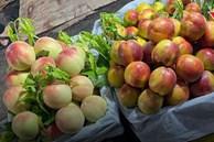 Bốn loại đào Trung Quốc đổ về chợ Việt, giá rẻ hơn rau