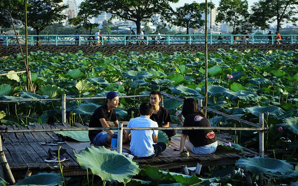 Thu nhập khủng nhờ trồng sen Hồ Tây-8