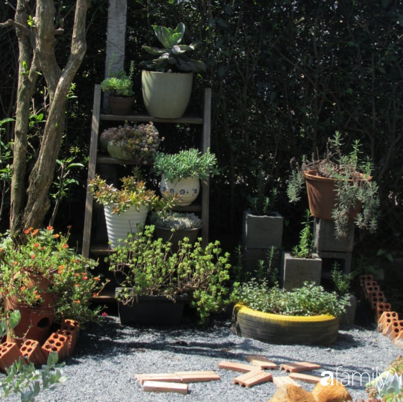Chỉ tốn hơn 1 triệu đồng, mẹ trẻ biến hình mảnh đất nhỏ trở thành khu vườn trồng xương rồng, sen đá đẹp mê mẩn ở Đà Lạt-25