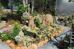 Chỉ tốn hơn 1 triệu đồng, mẹ trẻ 'biến hình' mảnh đất nhỏ trở thành khu vườn trồng xương rồng, sen đá đẹp mê mẩn ở Đà Lạt