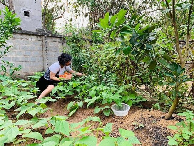 Chiêm ngưỡng nhà vườn bạc tỷ rau trái xum xuê, hoa nở bốn mùa của sao Việt-14