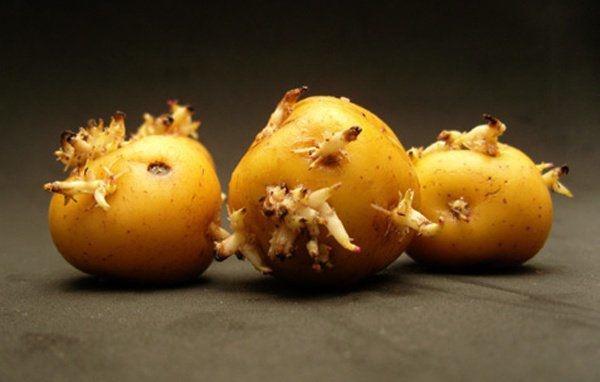 6 loại rau củ chứa đầy độc tố có thể gây ung thư, thiệt mạng nhưng nhiều người vẫn ăn-2