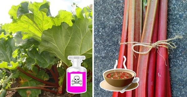 6 loại rau củ chứa đầy độc tố có thể gây ung thư, thiệt mạng nhưng nhiều người vẫn ăn-4