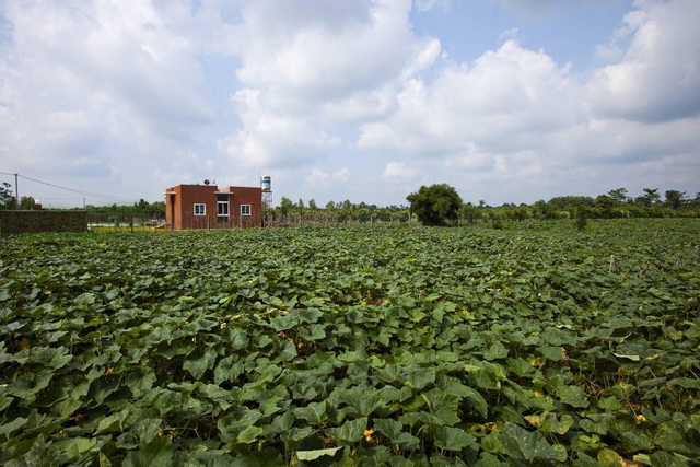 """Nhà vườn rộng 90m2 ở Đồng Nai gây sốt"""" vì xây dựng chỉ 500 triệu đồng-3"""