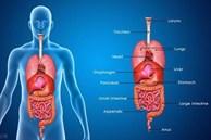 Bất thường xuất hiện trên cơ thể cho thấy các cơ quan nội tạng quá 'bẩn'