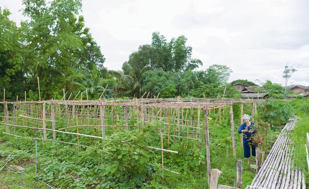 Khu vườn ngoại ô của người phụ nữ xinh đẹp rời phố vì thích trồng các loại cây gia vị-2