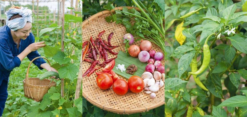 Khu vườn ngoại ô của người phụ nữ xinh đẹp rời phố vì thích trồng các loại cây gia vị-3