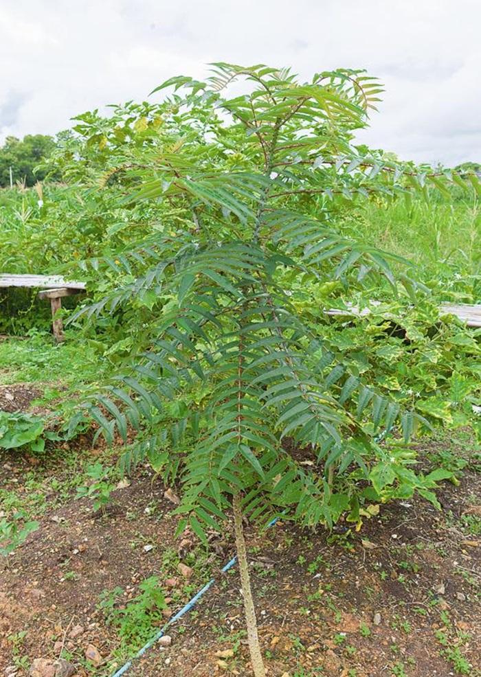 Khu vườn ngoại ô của người phụ nữ xinh đẹp rời phố vì thích trồng các loại cây gia vị-6