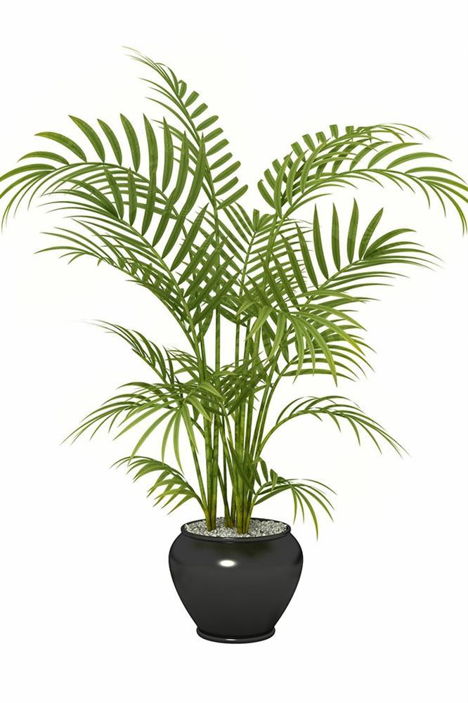 4 loại cây cảnh trồng vừa làm đẹp nhà vừa có thể giảm dị ứng từ chất độc có trong không khí-2
