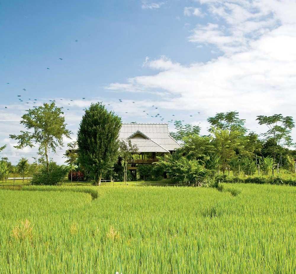 Nhà cấp 4 với thiết kế đẹp lãng mạn giữa cánh đồng lúa xanh tươi ở ngoại ô-1