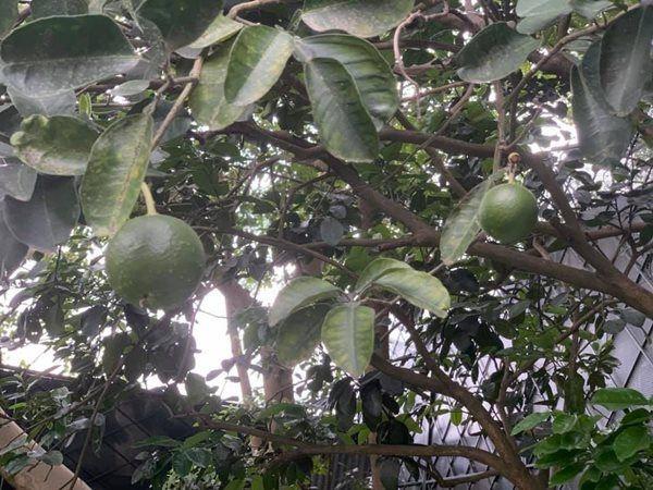 Hoa hậu một con bí ẩn nhất Việt Nam, ở biệt thự rộng lớn, rau trồng ăn không xuể-21