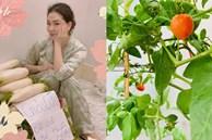 Hoa hậu một con bí ẩn nhất Việt Nam, ở biệt thự rộng lớn, rau trồng ăn không xuể