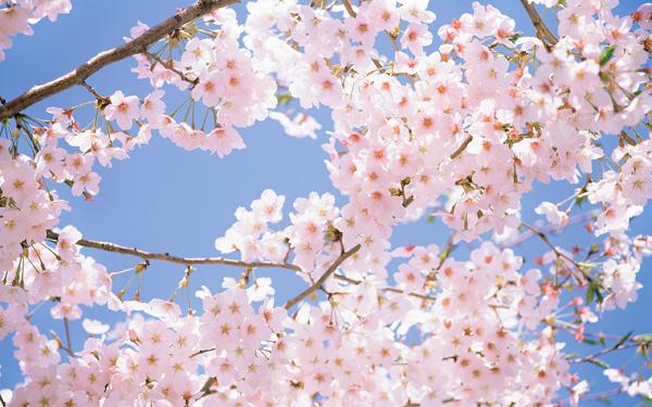 Cách chọn hoa tươi hợp phong thủy giúp gia chủ rước tài lộc vào nhà, cuộc sống luôn sung túc-3