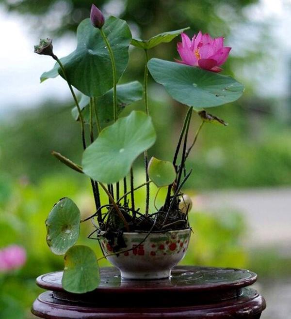Cách chọn hoa tươi hợp phong thủy giúp gia chủ rước tài lộc vào nhà, cuộc sống luôn sung túc-2