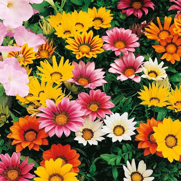Cách chọn hoa tươi hợp phong thủy giúp gia chủ rước tài lộc vào nhà, cuộc sống luôn sung túc-6