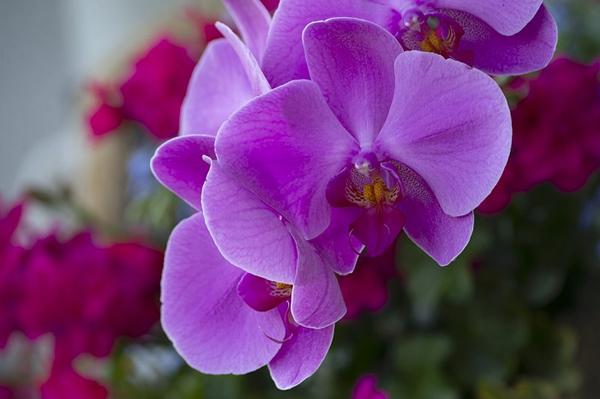 Cách chọn hoa tươi hợp phong thủy giúp gia chủ rước tài lộc vào nhà, cuộc sống luôn sung túc-4