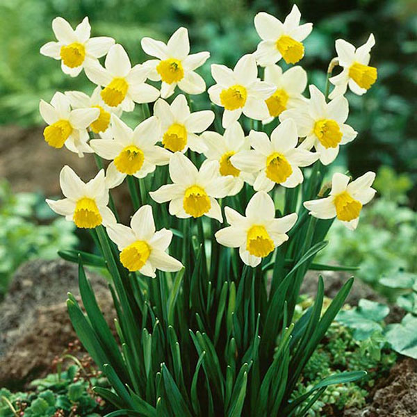 Cách chọn hoa tươi hợp phong thủy giúp gia chủ rước tài lộc vào nhà, cuộc sống luôn sung túc-5