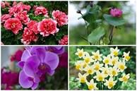 Cách chọn hoa tươi hợp phong thủy giúp gia chủ rước tài lộc vào nhà, cuộc sống luôn sung túc