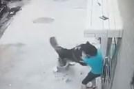 Đi học về rồi khiêu khích con chó, cậu bé bị tấn công trước sự bất lực của mọi người xung quanh, xem lại cảnh tượng ấy ai cũng xót xa