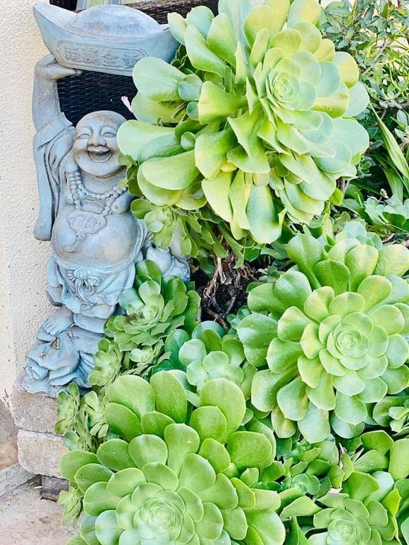 Ca sĩ Bằng Kiều khoe hoa quả thu hoạch trong vườn nhà, nhìn là mê-7