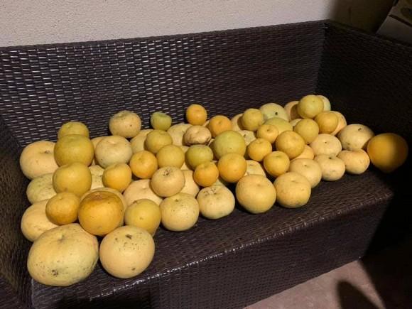 Ca sĩ Bằng Kiều khoe hoa quả thu hoạch trong vườn nhà, nhìn là mê-9
