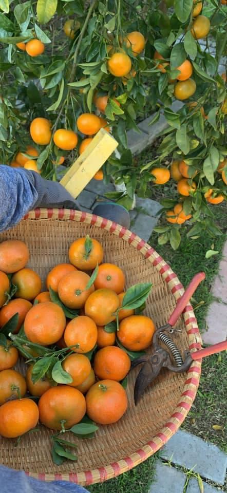 Ca sĩ Bằng Kiều khoe hoa quả thu hoạch trong vườn nhà, nhìn là mê-13