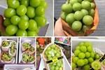 Đắt gấp 5 lần hàng Mỹ, loại quả Trung Quốc được ráo riết lùng mua-3