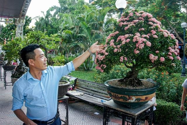 Mãn nhãn với cây hoa trang đột biến sắc hồng giá gần nửa tỷ-3