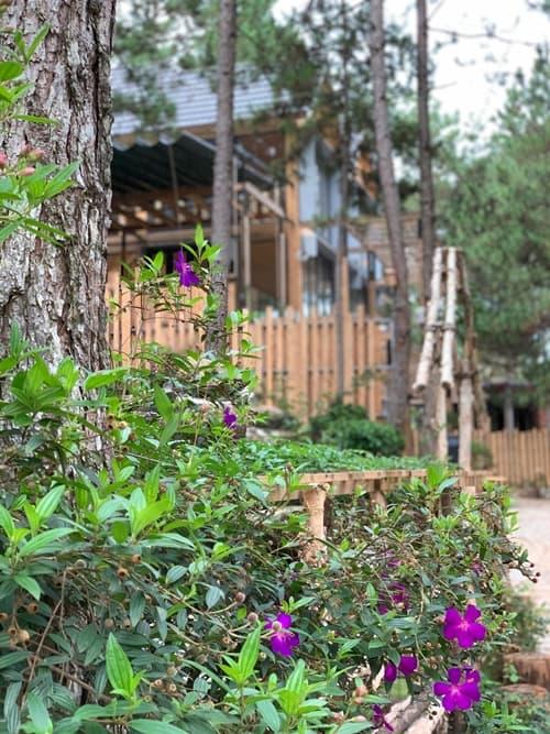 Thêm loạt ảnh bên trong biệt thự gỗ 800 m2 ở Đà Lạt của vợ chồng Phan Như Thảo-3