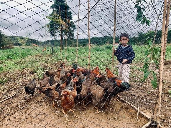 Lý Hải đưa cả gia đình về trang trại ở quê tránh dịch-1
