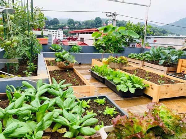 Ăn không xuể với khu vườn rau sạch trên mây của mẹ đảm Sơn La-1
