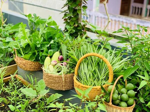 Ăn không xuể với khu vườn rau sạch trên mây của mẹ đảm Sơn La-3