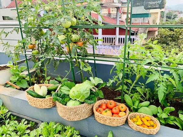 Ăn không xuể với khu vườn rau sạch trên mây của mẹ đảm Sơn La-2