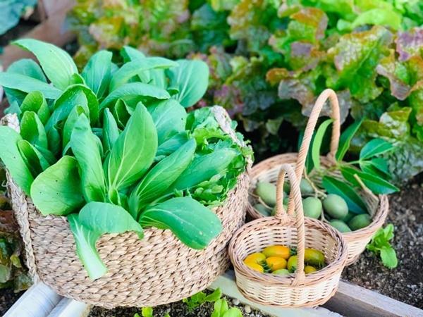 Ăn không xuể với khu vườn rau sạch trên mây của mẹ đảm Sơn La-10