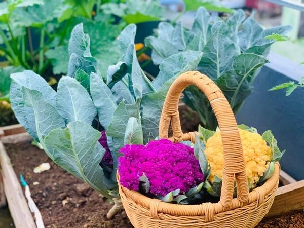 Ăn không xuể với khu vườn rau sạch trên mây của mẹ đảm Sơn La-11