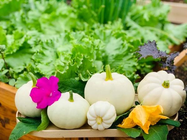 Ăn không xuể với khu vườn rau sạch trên mây của mẹ đảm Sơn La-13