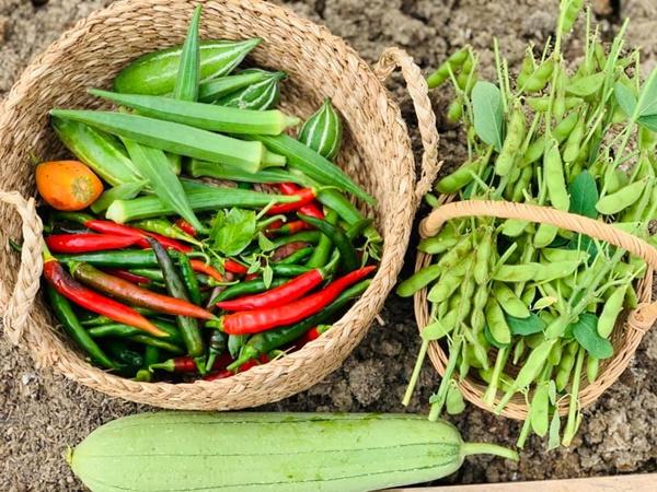 Ăn không xuể với khu vườn rau sạch trên mây của mẹ đảm Sơn La-15