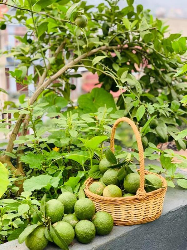 Ăn không xuể với khu vườn rau sạch trên mây của mẹ đảm Sơn La-21