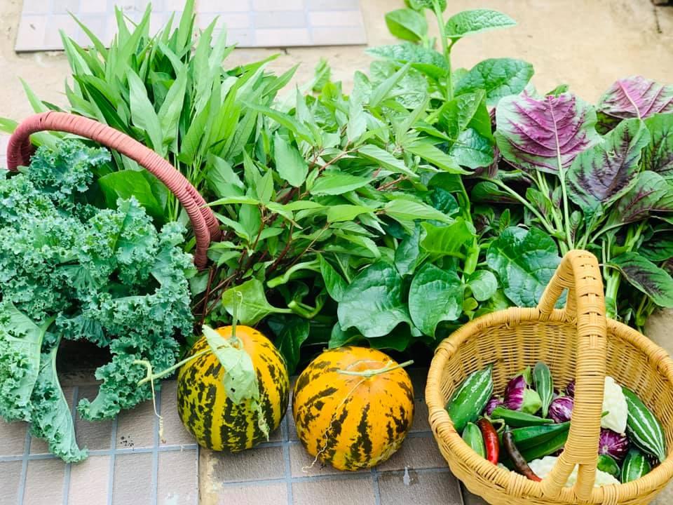 Ăn không xuể với khu vườn rau sạch trên mây của mẹ đảm Sơn La-17