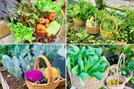 'Ăn không xuể' với khu vườn rau sạch 'trên mây' của mẹ đảm Sơn La