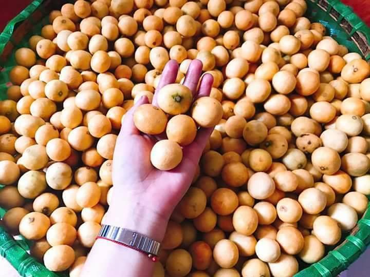 Sấu chín cuối mùa giá 40 ngàn/kg vẫn đắt khách, tiểu thương cố thu gom cũng không có bán-1