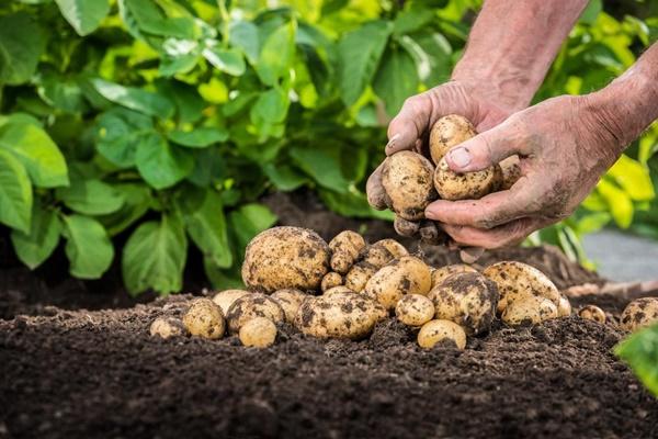 Đừng vứt vỏ trứng, vỏ chuối hay khoai tây mọc mầm đi vì chúng còn dùng được trong vô vàn việc hữu ích đây này!-5