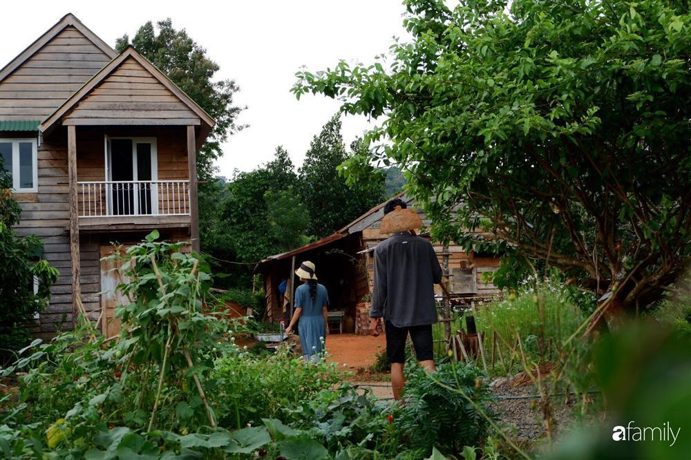 Khu vườn xanh tươi rộn ràng cây lá của cặp đôi quyết rời Sài Gòn tấp nập về núi rừng Tây Nguyên tìm chốn bình yên-3