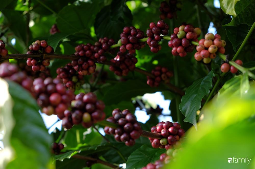 Khu vườn xanh tươi rộn ràng cây lá của cặp đôi quyết rời Sài Gòn tấp nập về núi rừng Tây Nguyên tìm chốn bình yên-5
