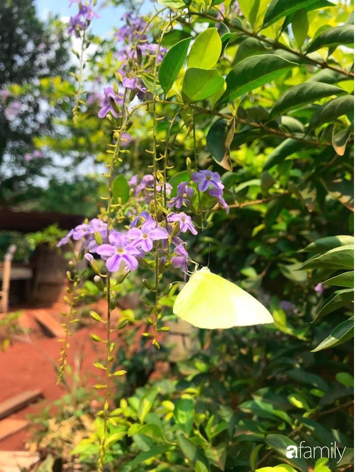 Khu vườn xanh tươi rộn ràng cây lá của cặp đôi quyết rời Sài Gòn tấp nập về núi rừng Tây Nguyên tìm chốn bình yên-23