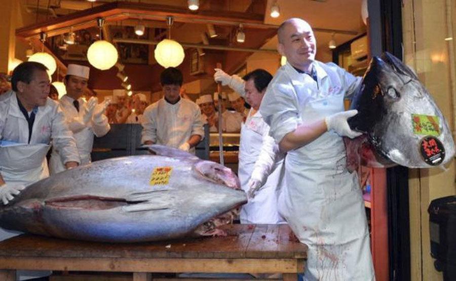 Sự thật tàn khốc đằng sau miếng sushi cá ngừ đắt giá-4
