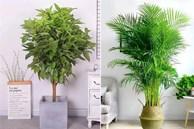 Trồng 4 loại cây này trong nhà, gia đình có ngay 'máy tạo độ ẩm tự nhiên', thanh lọc không khí tiết kiệm được khối tiền điện mỗi năm