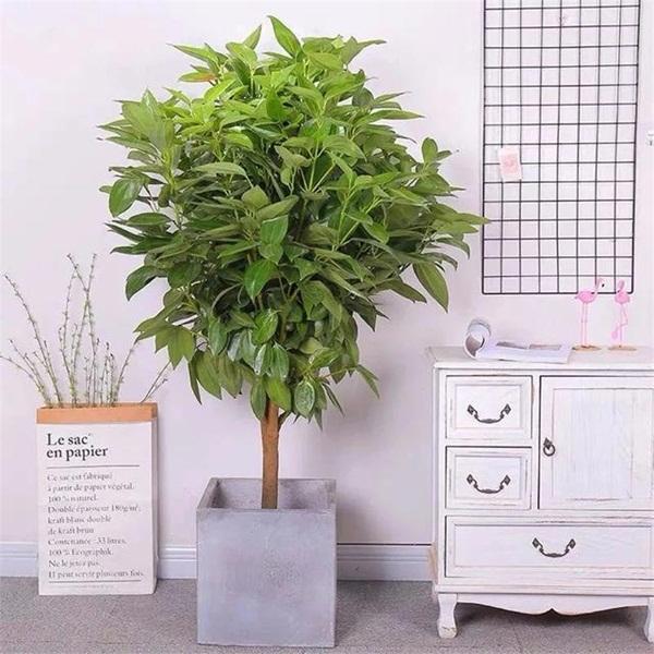 Trồng 4 loại cây này trong nhà, gia đình có ngay máy tạo độ ẩm tự nhiên, thanh lọc không khí tiết kiệm được khối tiền điện mỗi năm-1